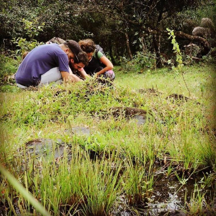 Hábitat de la Utricularia pusilla en Panamá