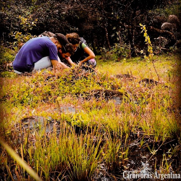 plantas-carnivoras-habitat-rodolfo-flores-victoria-coppiini-federico-parrilli-1