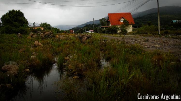utricularia-habitat-panama-1