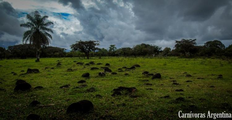 utricularia-habitat-panama-dolega-1