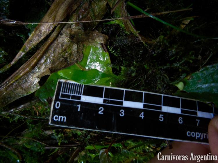 06 Reserva Natural Cerro Gaital - Valle de Antón (26)-1-2