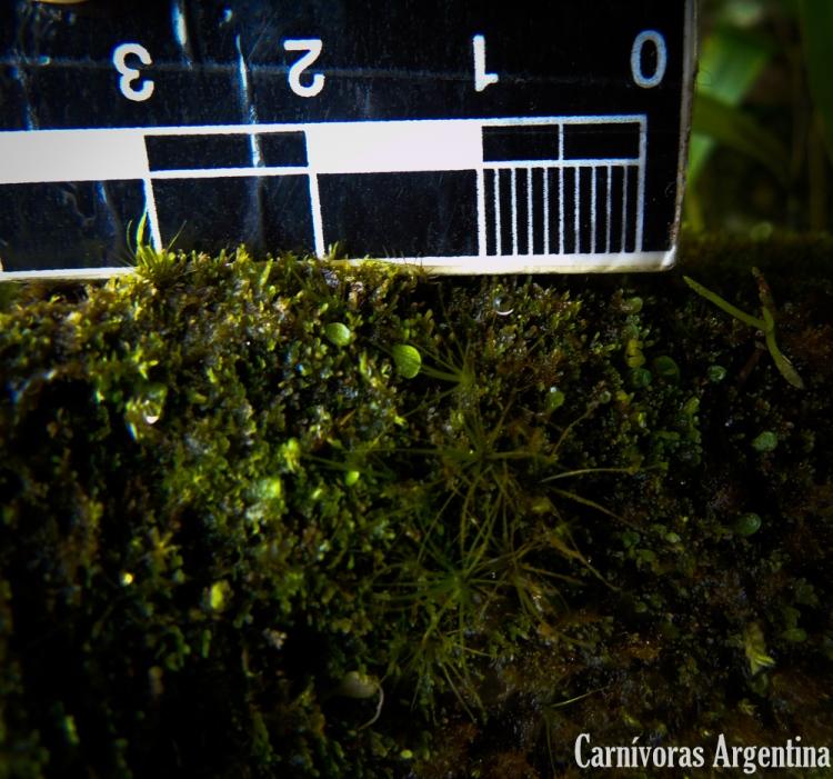 06 Reserva Natural Cerro Gaital - Valle de Antón (38)-1