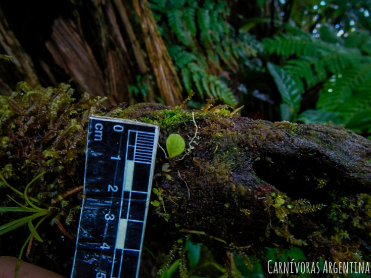 07 Darien - Reserva Natural Cerro Chucantí (200)-1.jpg