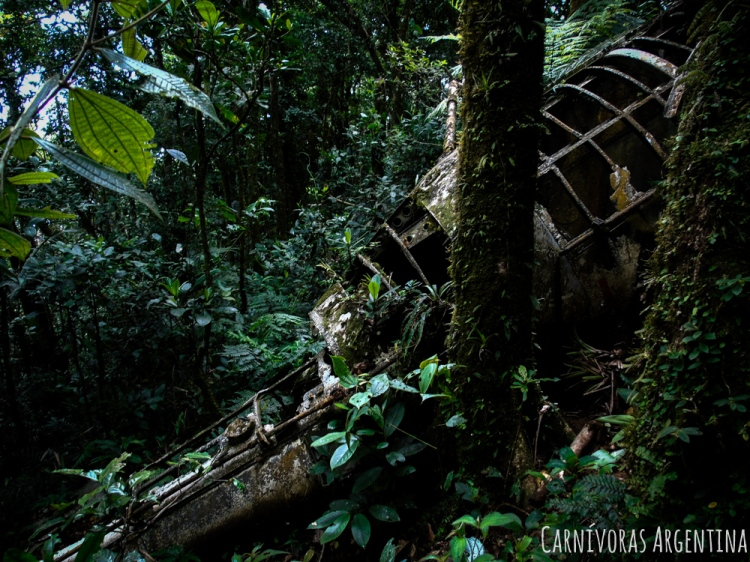 07 Darien - Reserva Natural Cerro Chucantí (22)-1