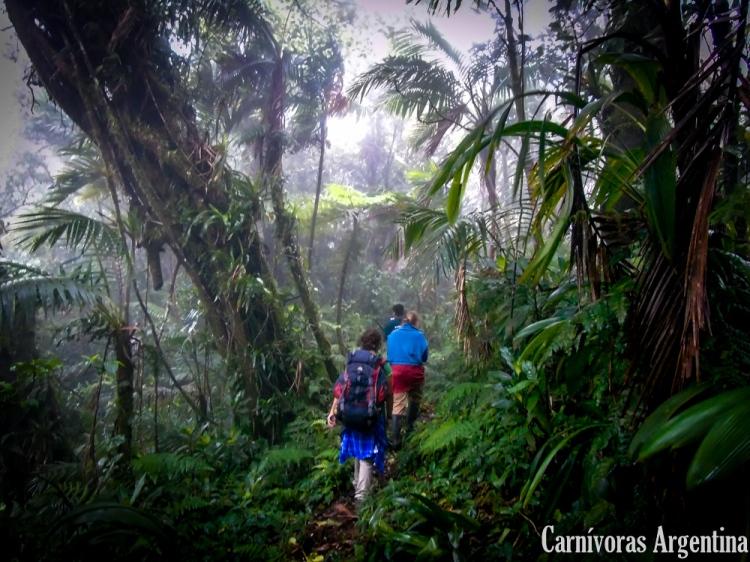 plantas-carnivoras-panama-bosque-carnivoras-argentina