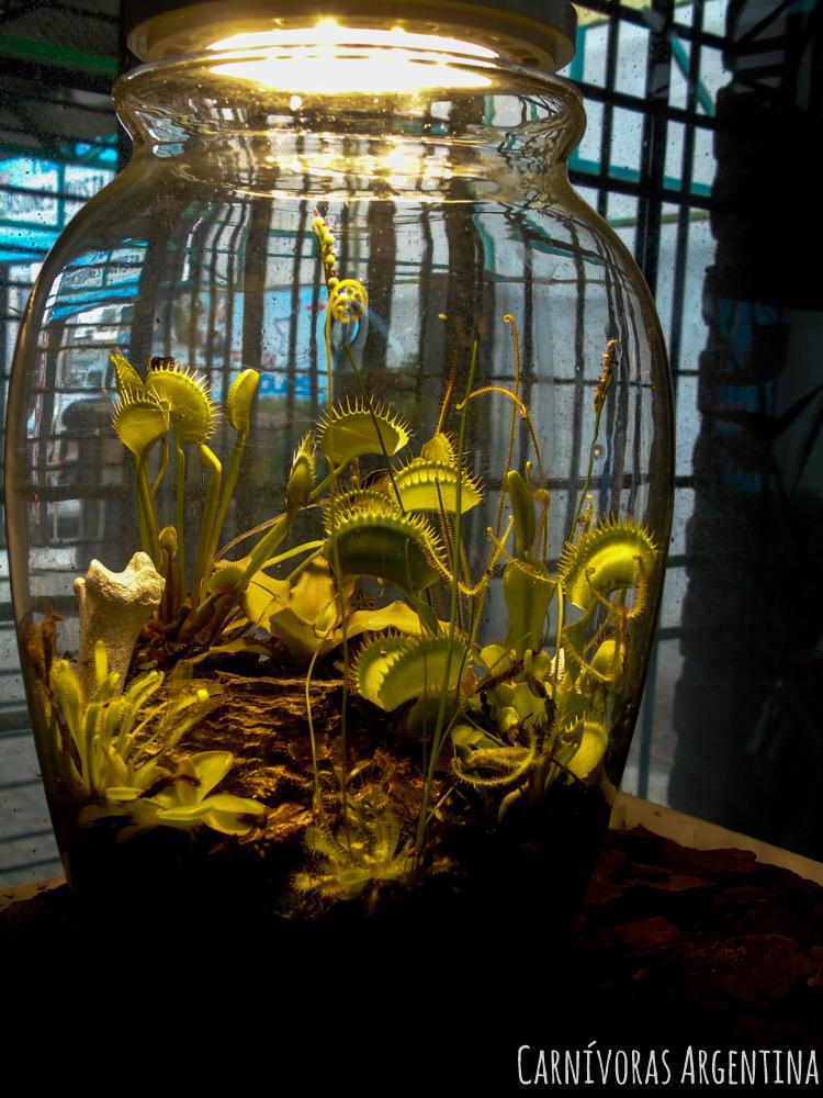 terrario-plantas-carnivoras-argentina