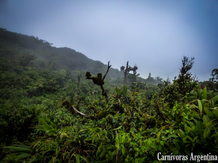 valle-de-anton-plantas-carnivoras